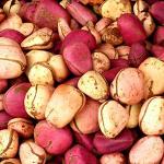 red and white kola nut
