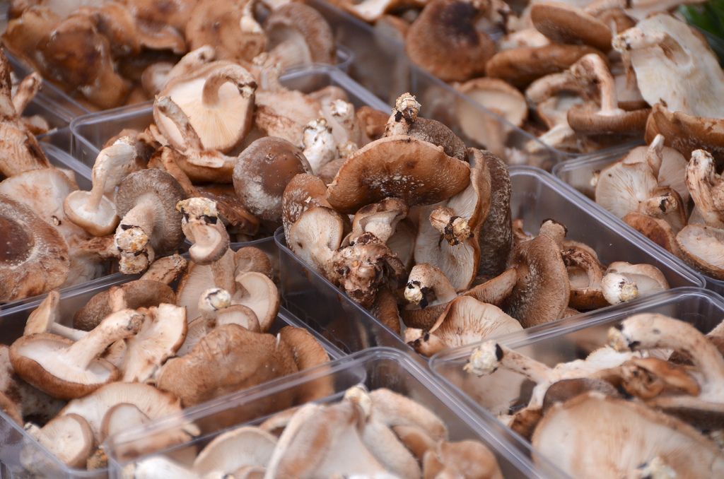 food additions 2 - mushrooms