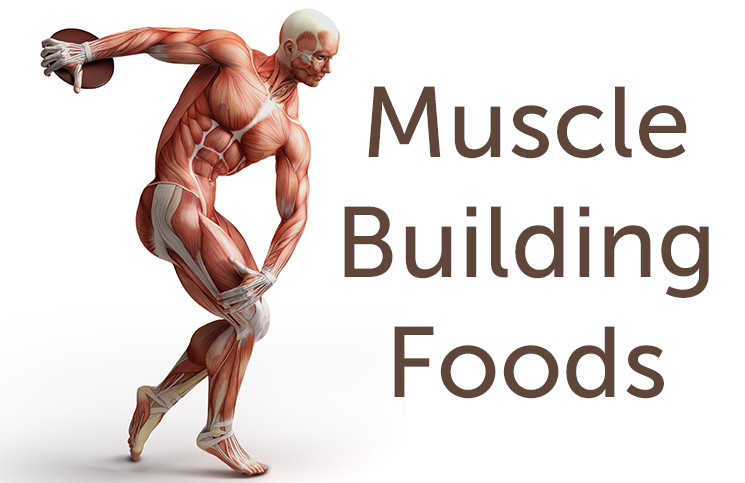 muscle-building-foods-cover-photo