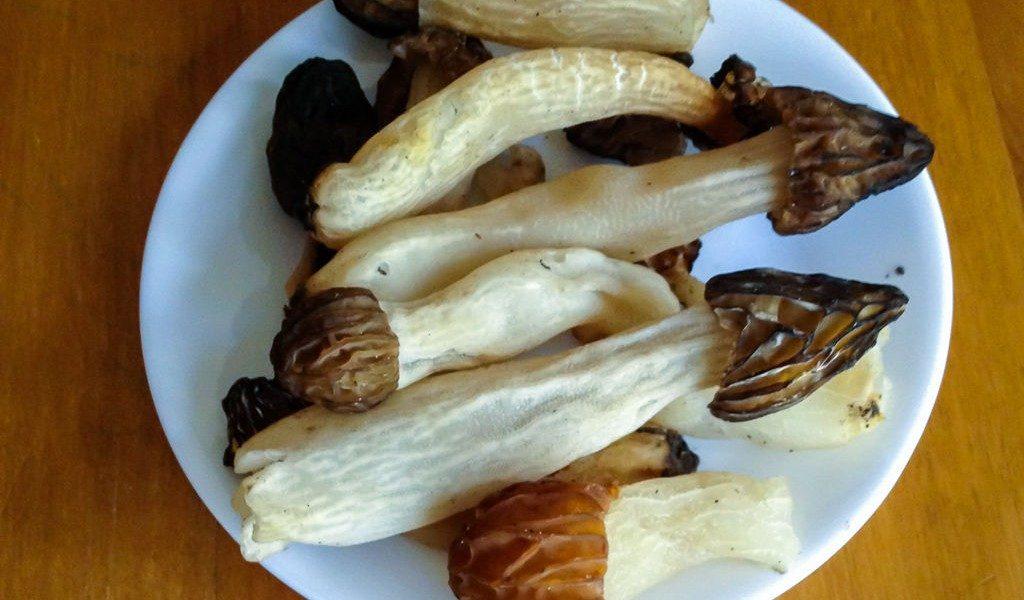 healthy foods - edible wild mushrooms
