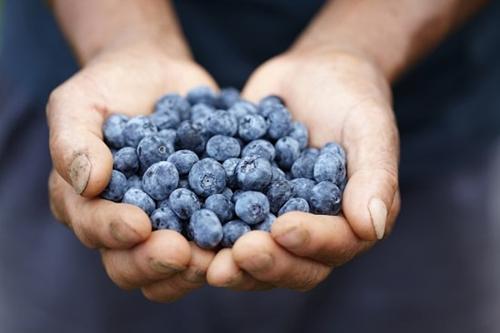 Blueberries for mental focus